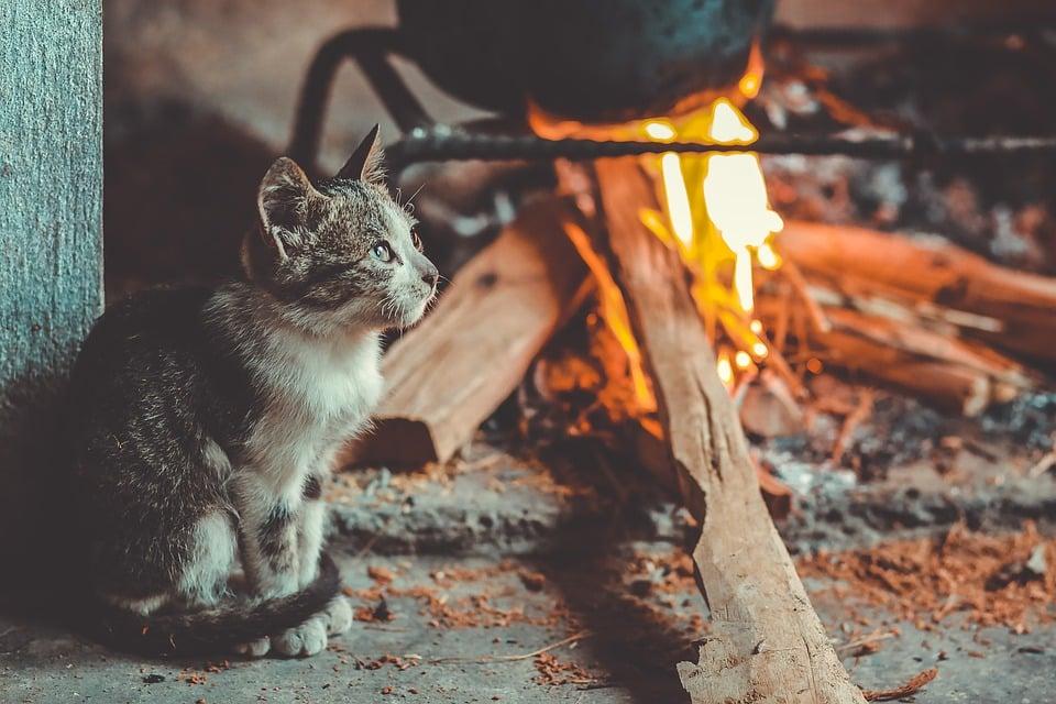 chat au coin du feu