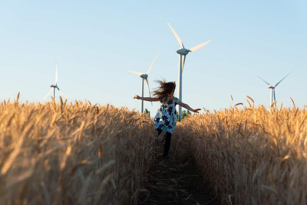 champ et éolienne