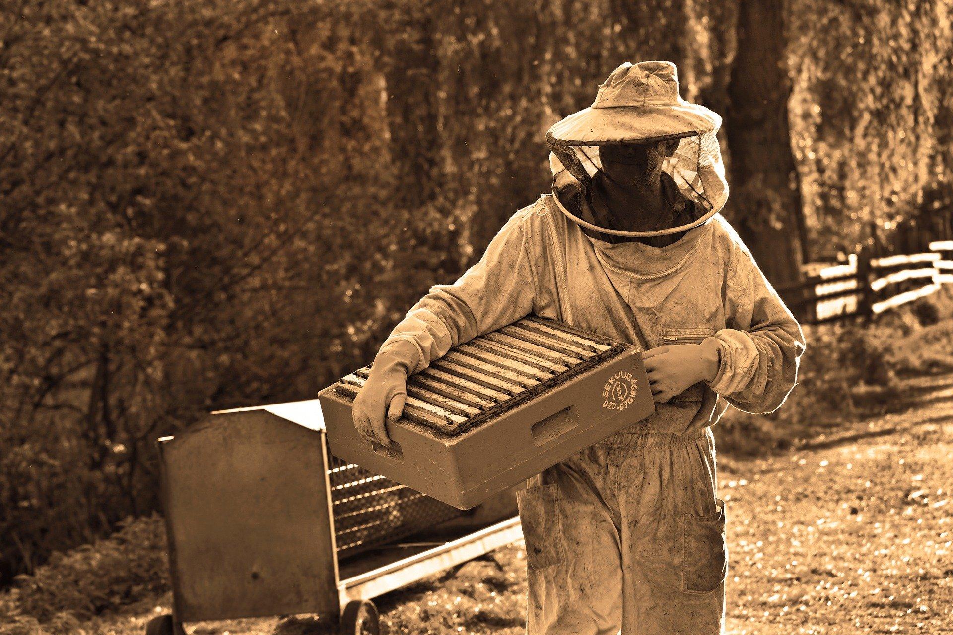 Apiculteur à la ruche