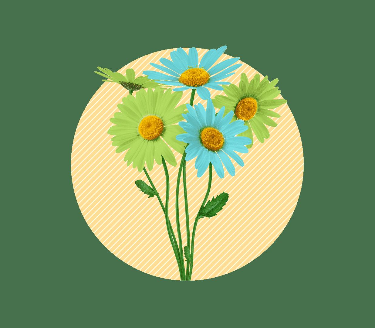 électricité verte et française